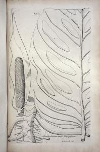 Botanicus. 1693