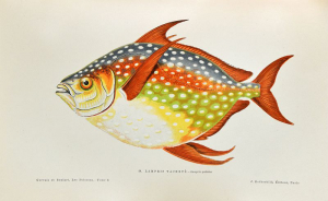 Les poissons. 1876