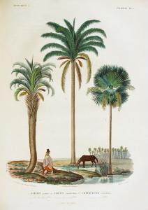 Voyage dans l'Amérique (..). 1847