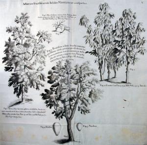 Voyage aux îles Madère (...). 1725