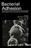 Bacterial adhesion. Mechanisms and physiological significance.