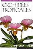Orchidées tropicales