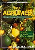 Les agrumes. Oranges, citrons, pamplemousses, kumquats...