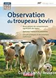 Observation du troupeau bovin