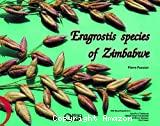 Eragrostis species of Zimbabwe
